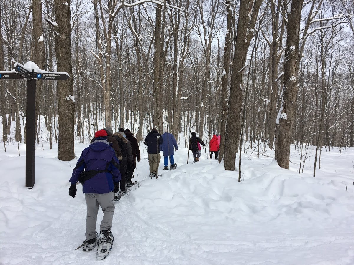 Several people snowshoe in Gatineau Park