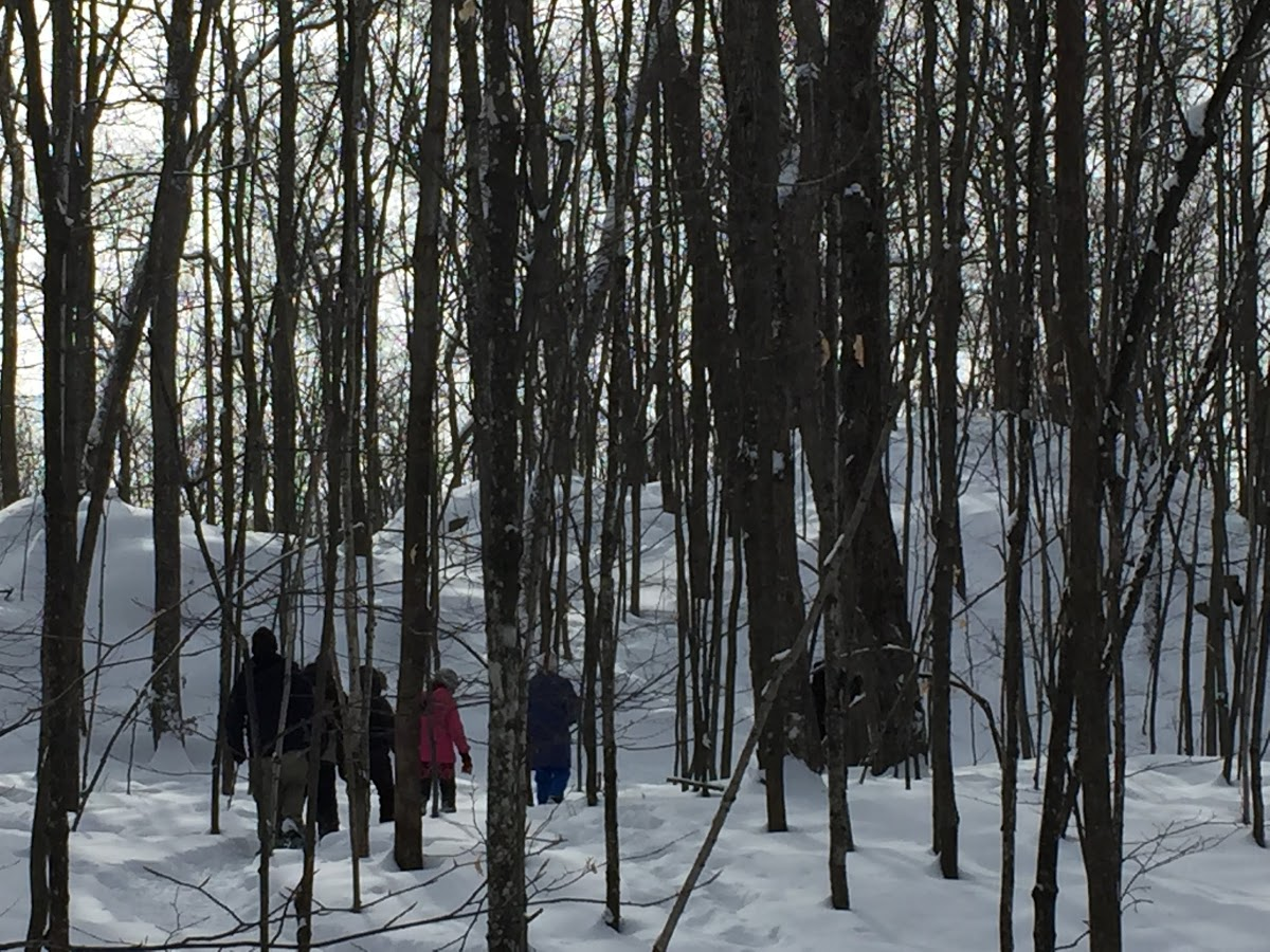 A group of people snowshoe in Gatineau Park